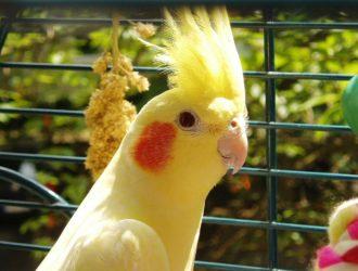 【オカメインコケージレイアウト】おしゃれはNG!鳥かごの置き場所はここに気をつけて!
